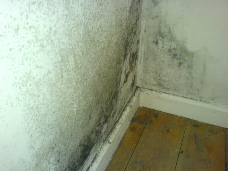 GST Rénovation - Ventilation moisissure mur angle